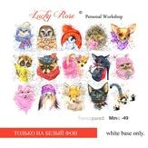Lucky Rose Слайдер-дизайн Minic 49