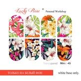 Lucky Rose Слайдер-дизайн Minic 45